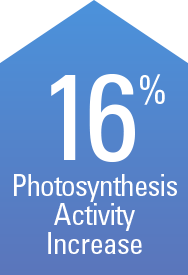 CROP+ resulted in a 16% increase in photosynthesis activity